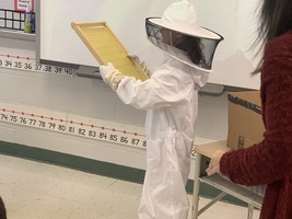 First Graders Learn About Bees