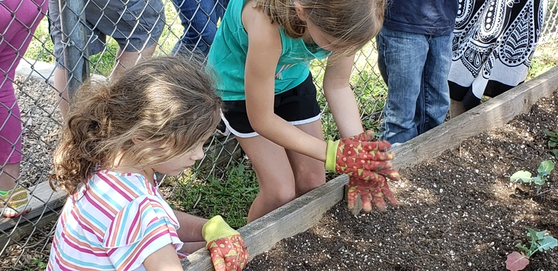 Students planting lettuce in small garden